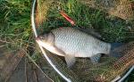 Обьемы пойманной рыбы в Саратовской области будут регулировать чиновники