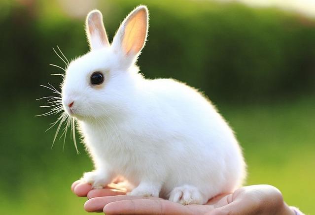 Пенсионер украл у соседа восемь разноцветных кроликов