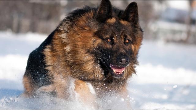 В Ртищевском районе служебная собака нашла склад с оружием и наркотиками