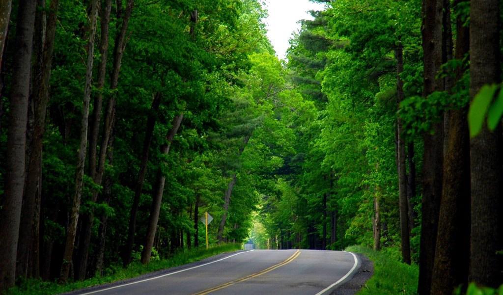 В Саратовской области очищено 230,8 км придорожных лесопасадок