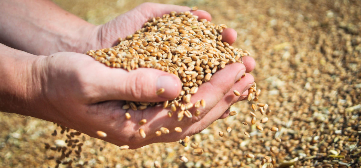 Министр сельского хозяйства поблагодарила ртищевцев за высокий намол зерна