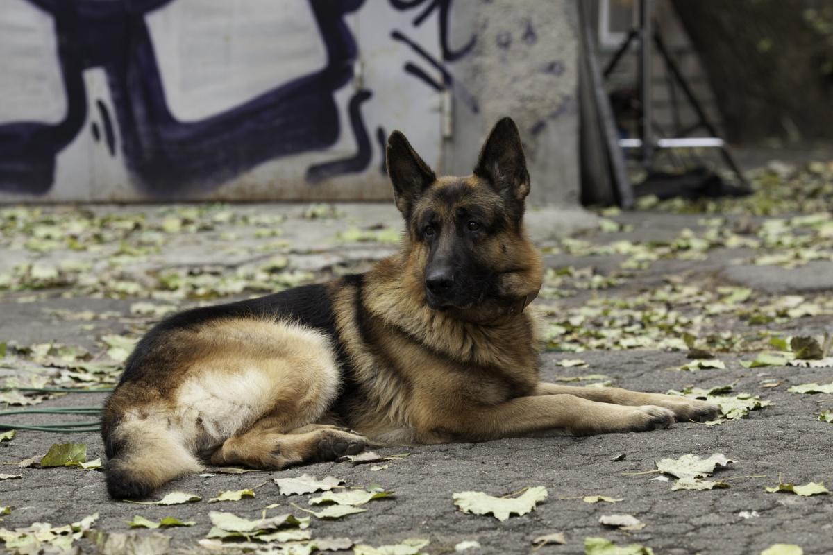 Служебная собака нашла более килограмма конопли в пакете у ртищевца