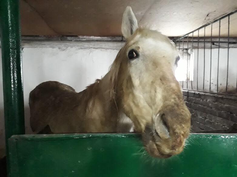 Балашовцы возмущены шокирующим состоянием лошадей из местной конной полиции
