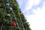 15 декабря состоится открытие городской елки