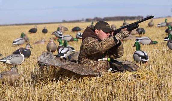 Стартовала выдача разрешений на весеннюю охоту