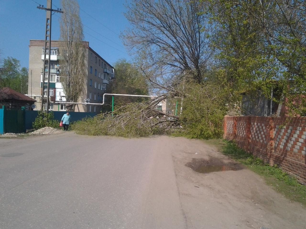 Упавшее дерево перекрыло проезжую часть