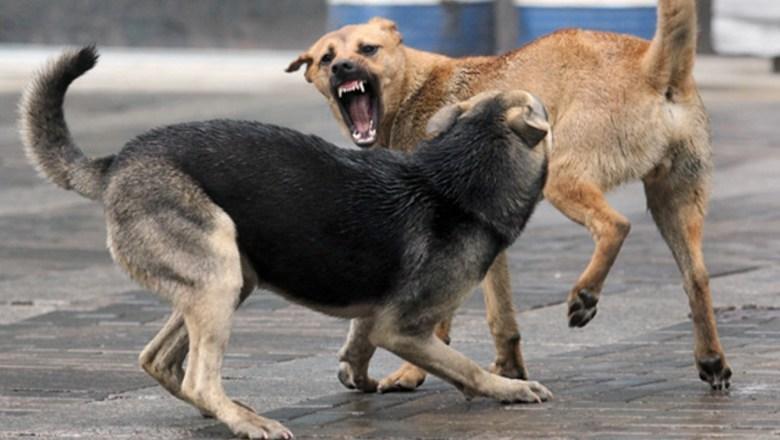 В Ртищеве планируется поймать 40 собак