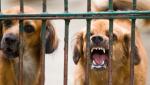 В Ртищевском районе отменен карантин по бешенству