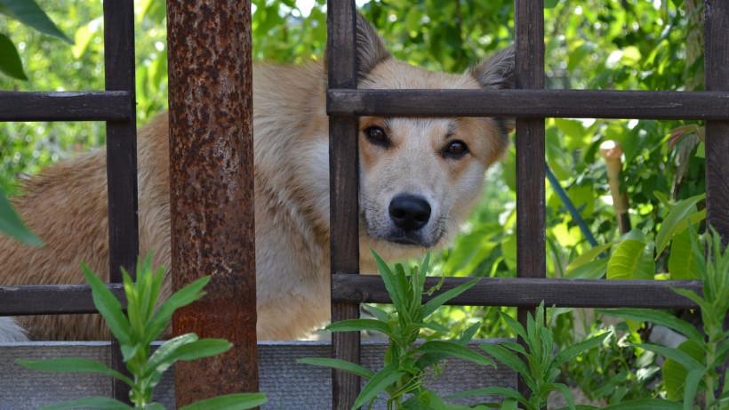 Деревню в Ртищевском районе закрыли на карантин по бешенству