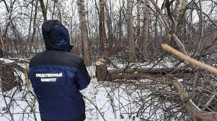 Рабочего насмерть придавило деревом