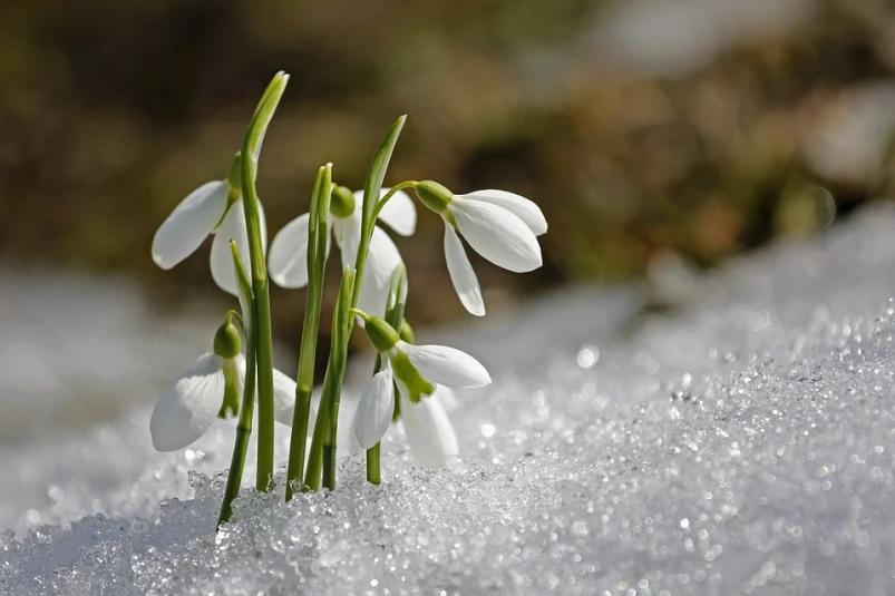 Последние выходные марта будут теплыми