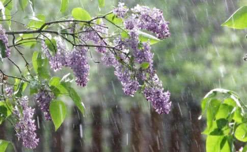 Синоптики обещают дождливую и прохладную погоду