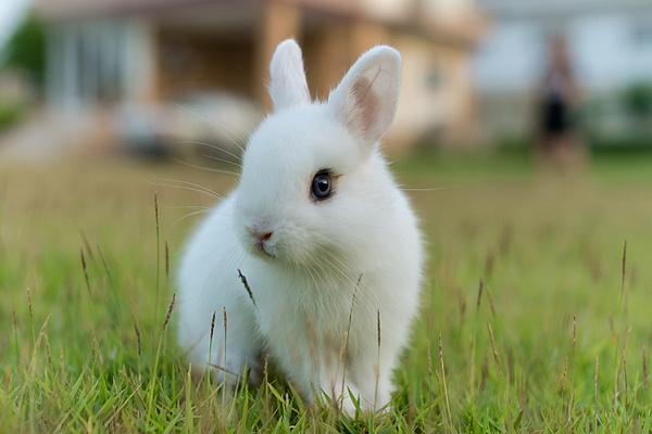 Ртищевец попался на удочку мошенников при продаже кроликов